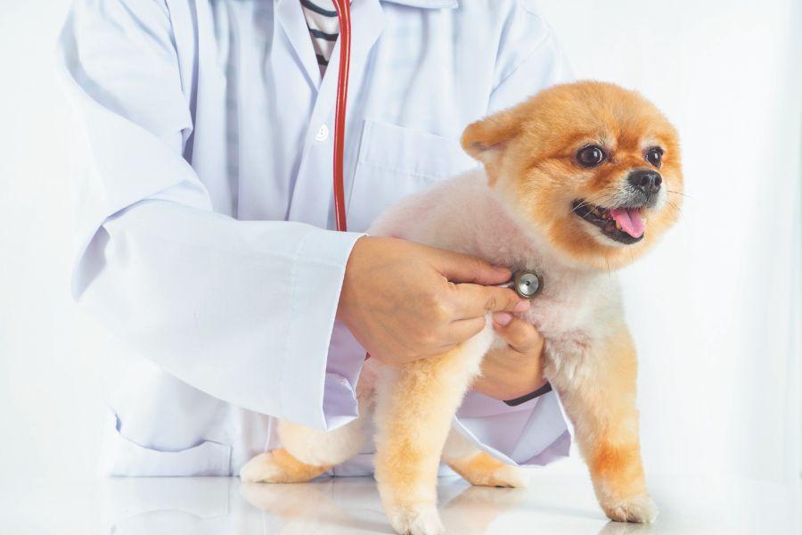 Consejos para tratar la gastroenteritis