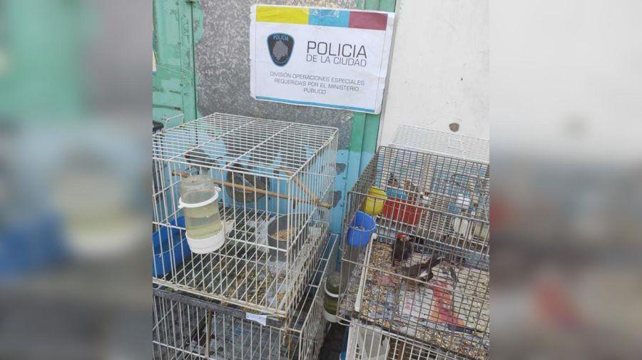 Rescate de aves en criadero ilegal en Liniers. 20210325