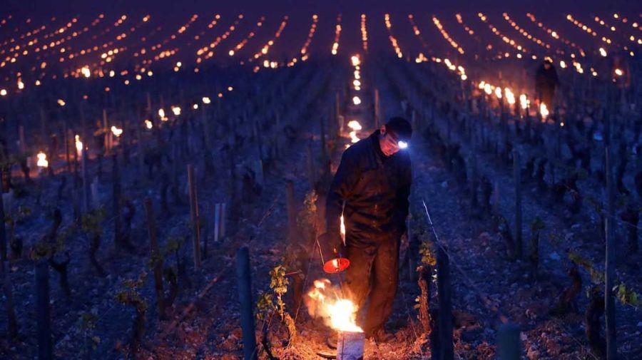 viñedos de Borgoña 20210408