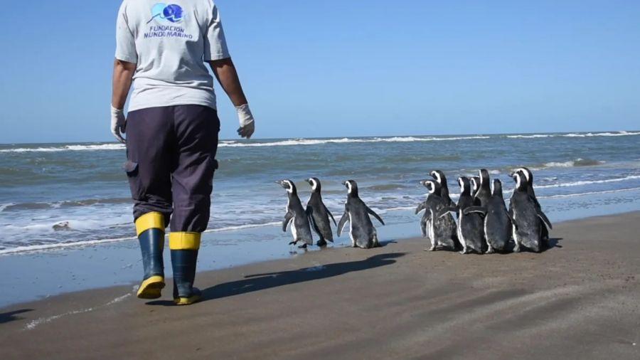 0409_pinguinos magallánicos