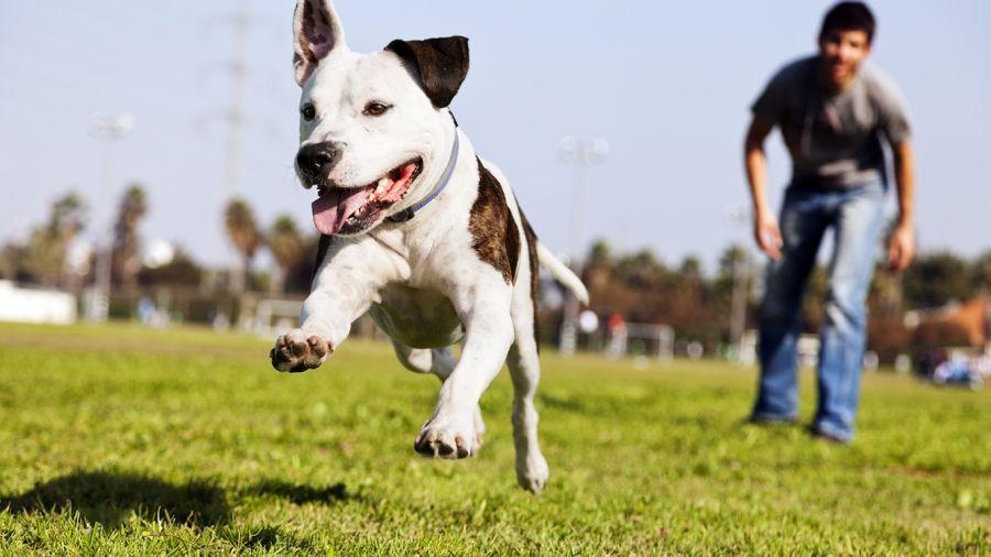0421_perros
