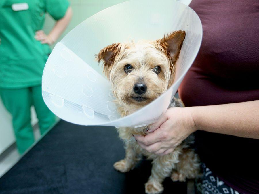 Pros y contras de castrar a nuestro perro o gato