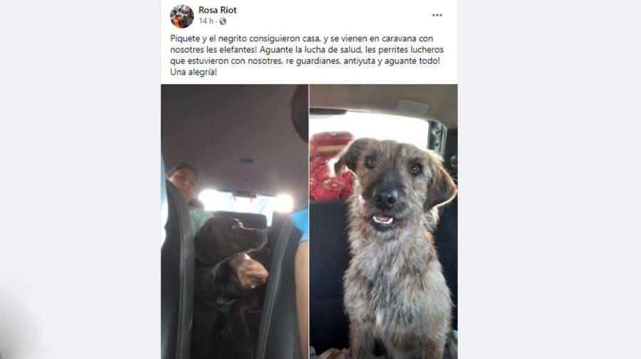 Tras la lucha en la ruta, los perros Piquete y Negrito consiguieron casa 20210429