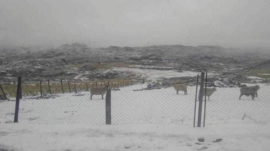 Nevada en Córdoba 20210504