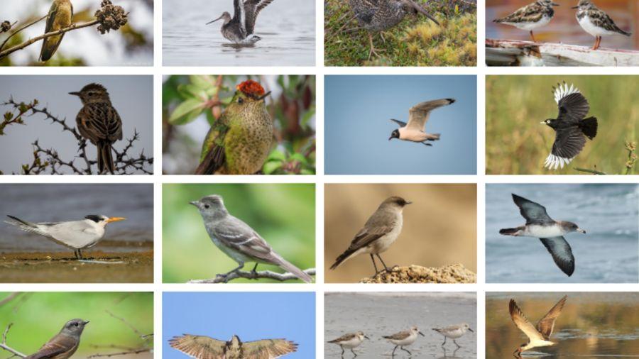 0507_dìa de las aves