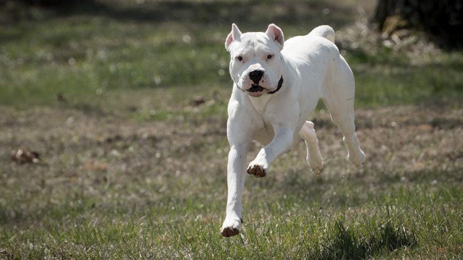 0516_perros