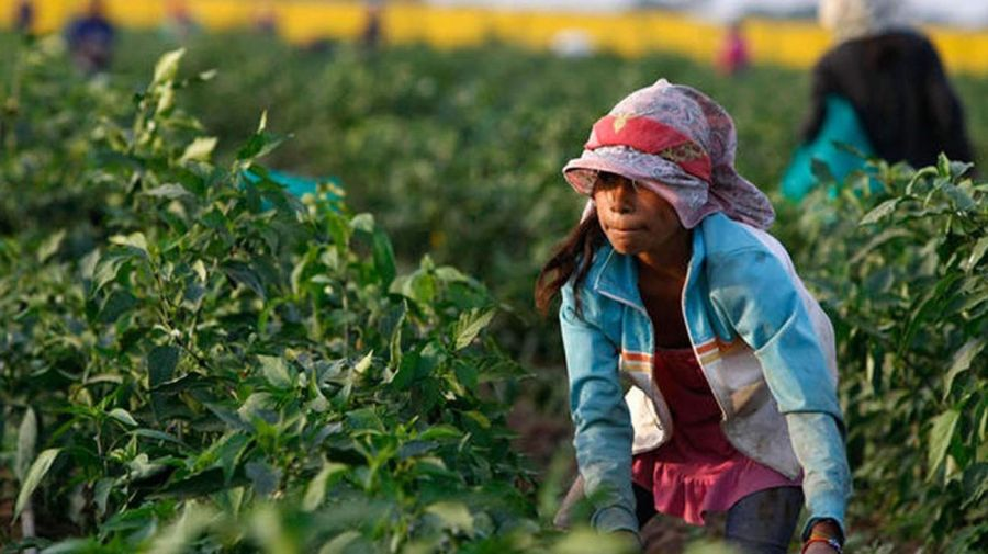 trabajo infantil 20210617