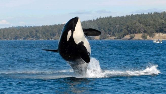0622_orcas