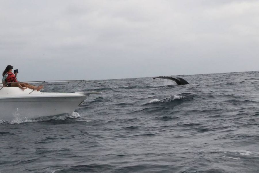 0625_ballenas jorobadas