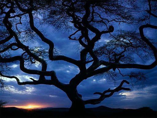 0702_árboles