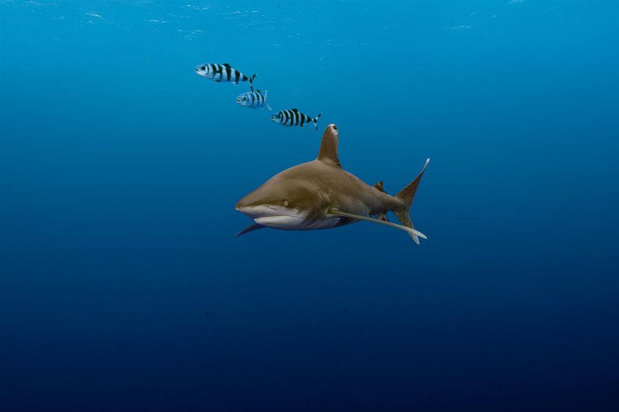 0714_tiburón