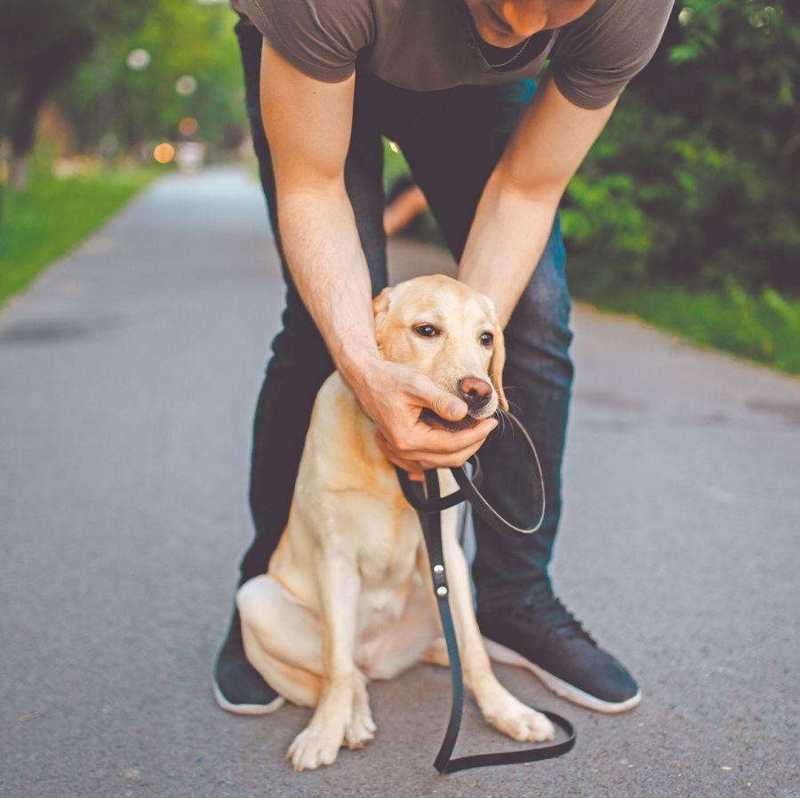 Si sospechamos que nuestro perro se ha tragado un objeto debemos acudir al veterinario a la mayor brevedad posible