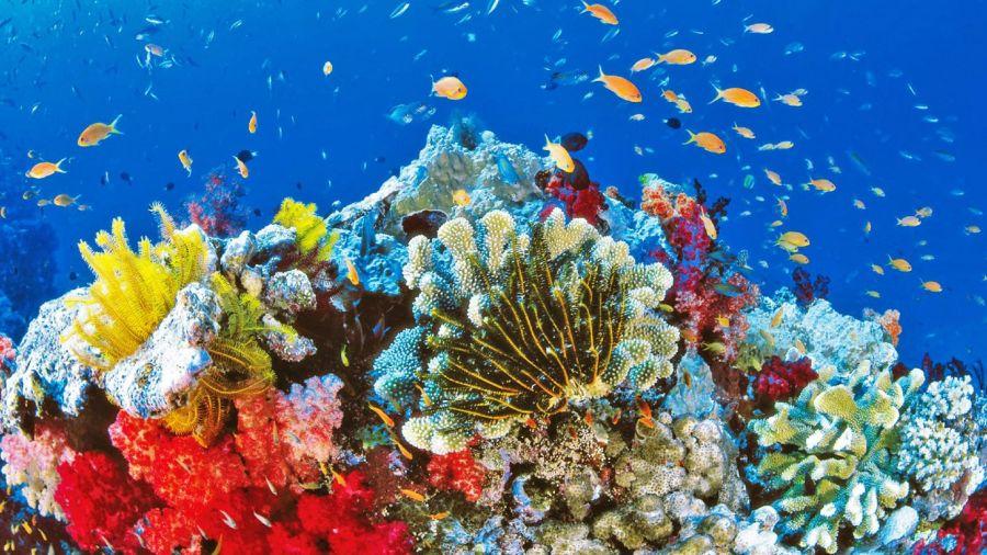 0723_barrera de coral