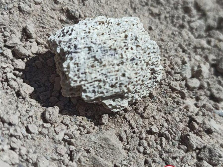 0723_restos fósiles