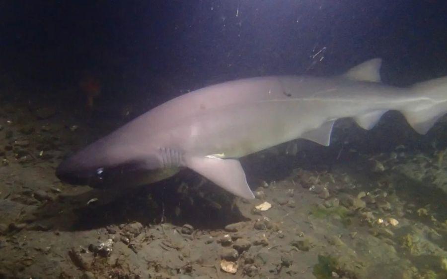 0802_tiburon