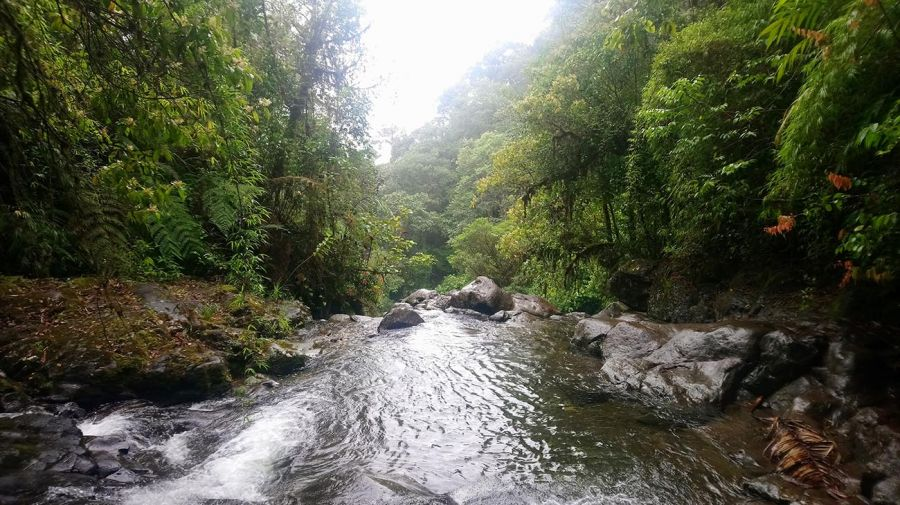 La Selva del Darien 20210804