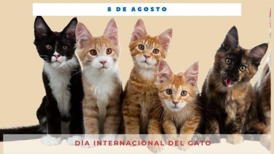 0806_día del gato