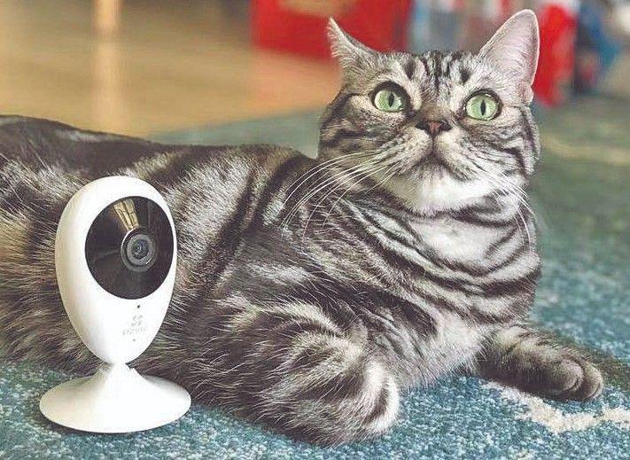 Las nuevas tecnologías permiten gestionar las cámaras de vigilancia desde el celular