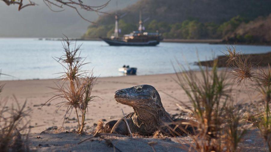 Parque Nacional de Komodo 20210809
