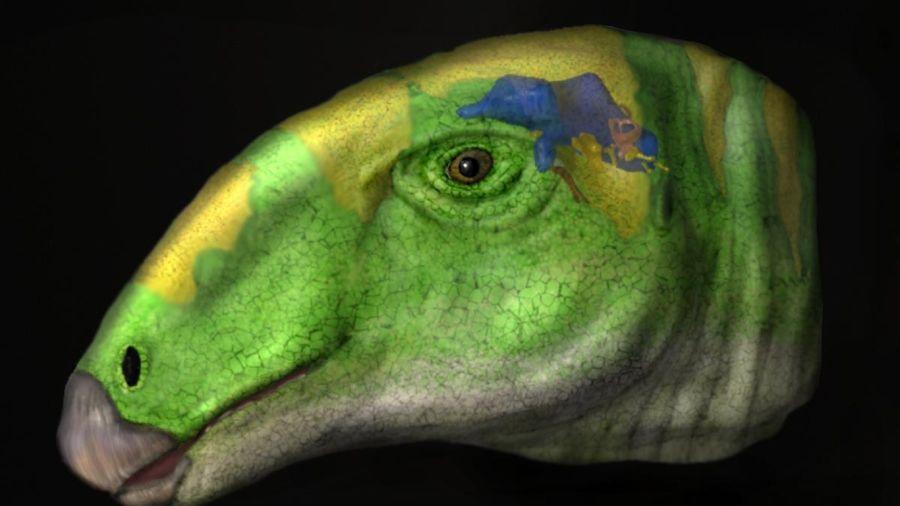 0813_dinosaurio volador