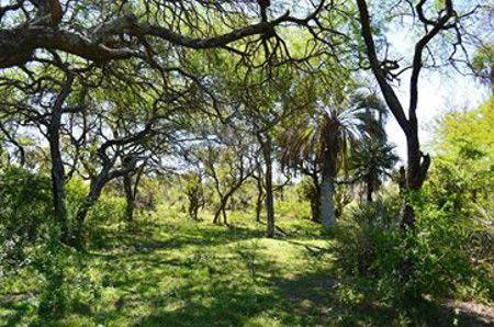 0813_parque selva de montiel