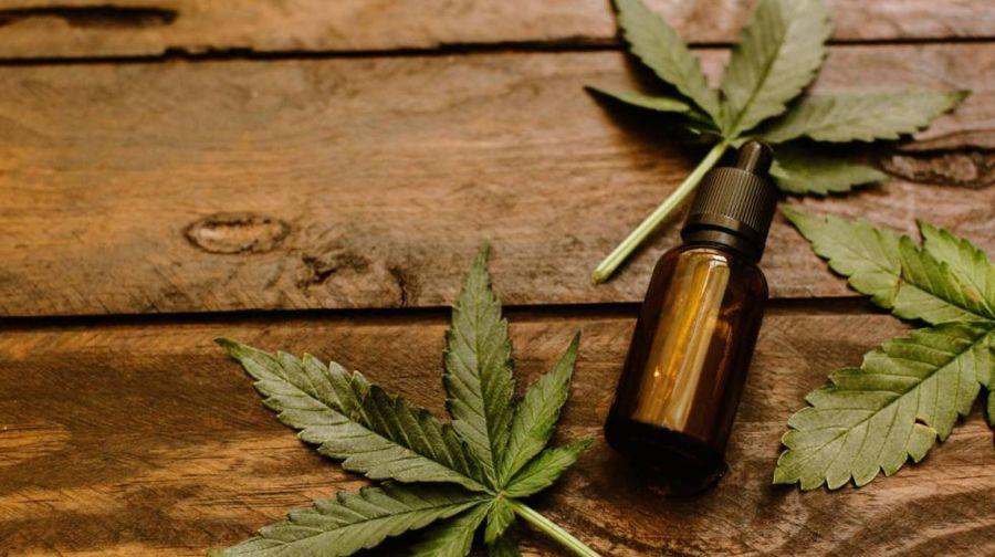 Savanna: el emprendimiento que enseña los beneficios del cannabis