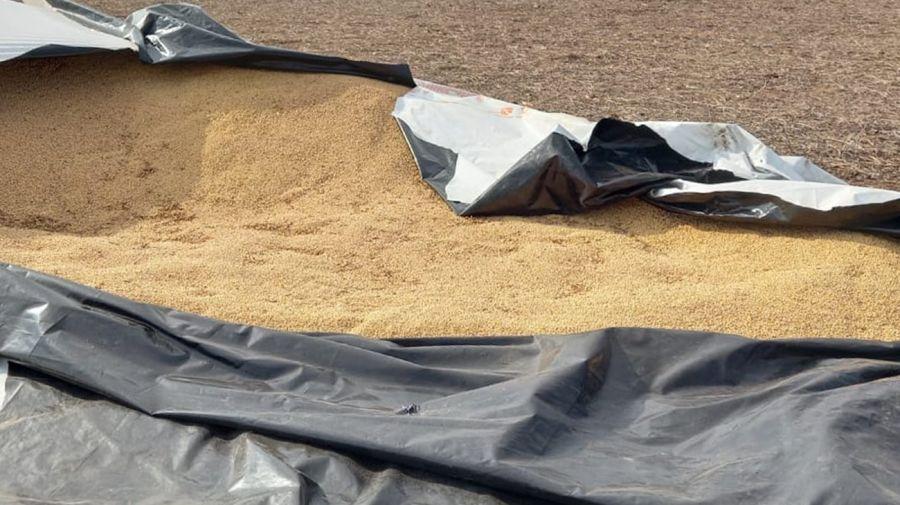 Robos de soja en Saliqueló