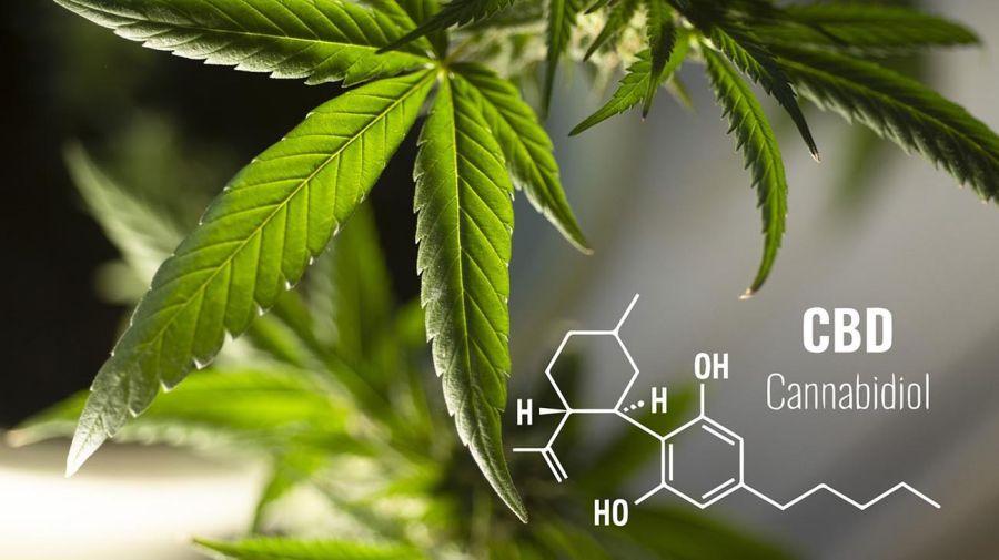 A partir de septiembre,el país contará con una producción íntegramente nacional de cannabis medicinal. 20210823