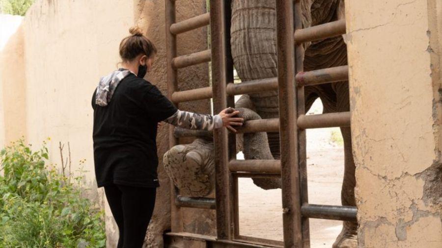 0902_elefantas