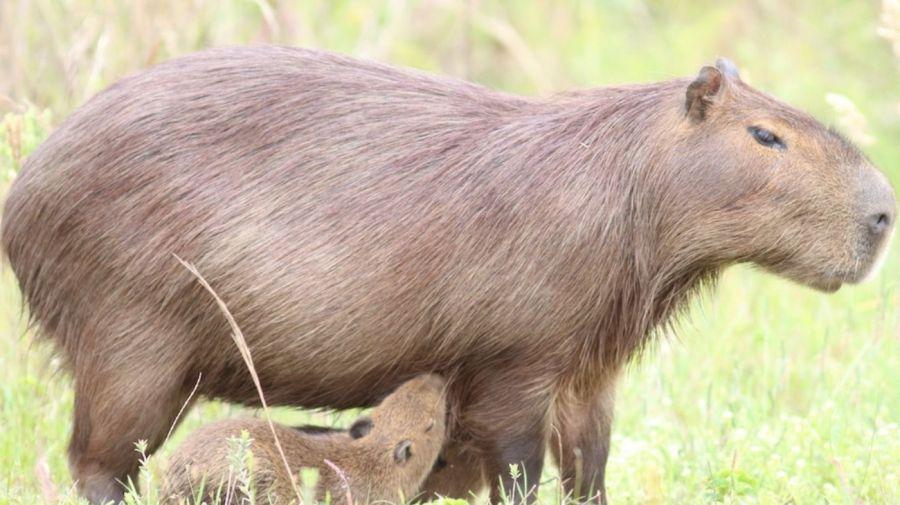 Circuitos Multiaventura hacia la vida silvestre