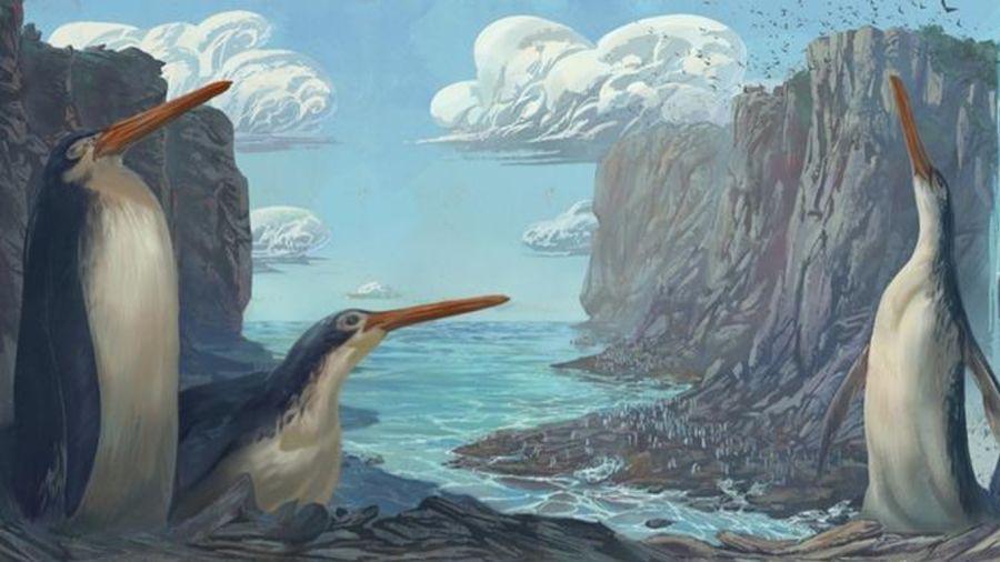 0917_pinguino