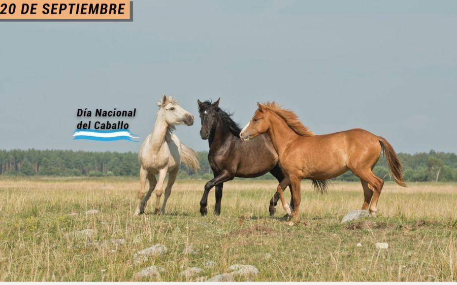 0920_caballo