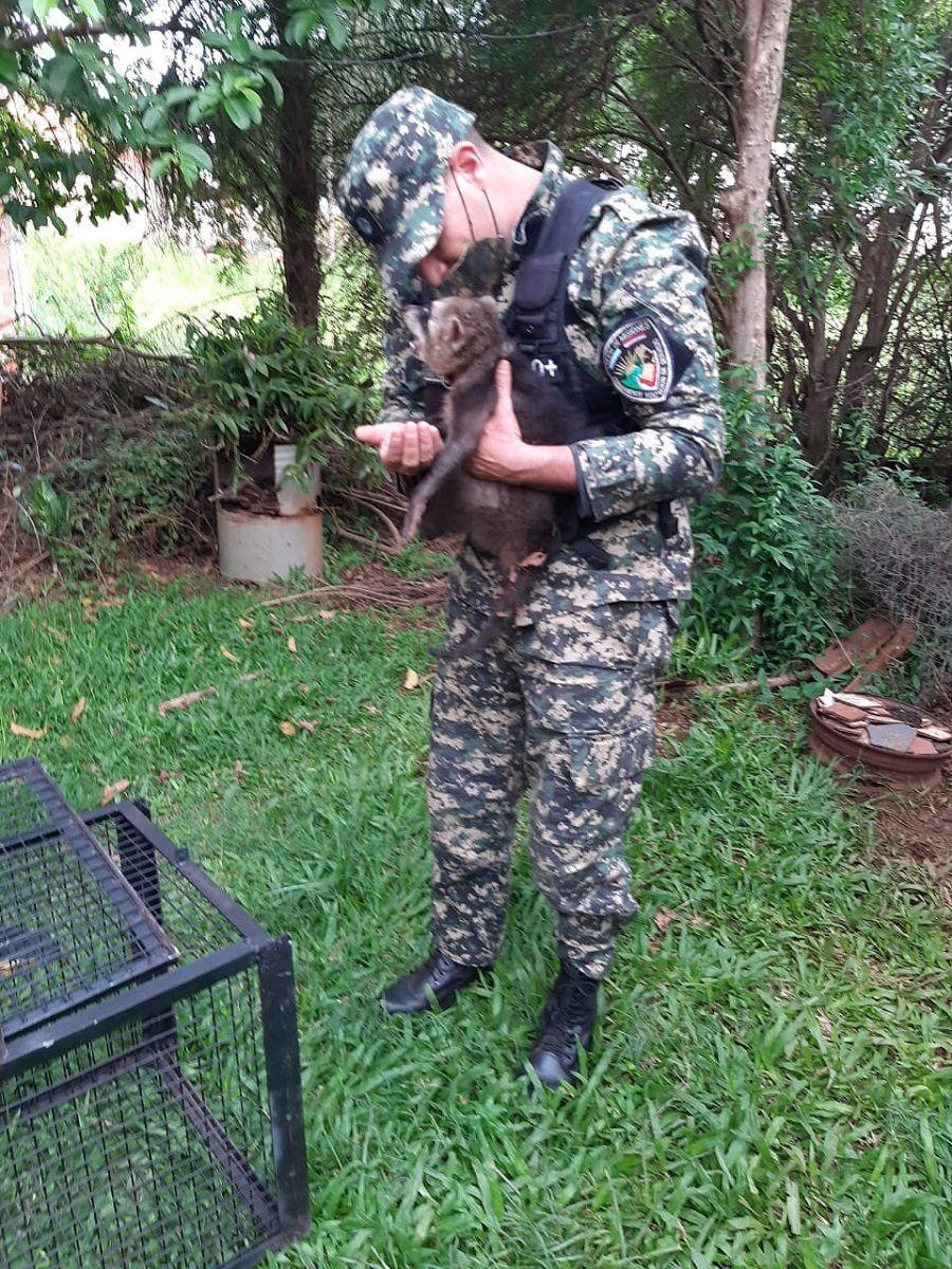 0923_mapache sudamericano
