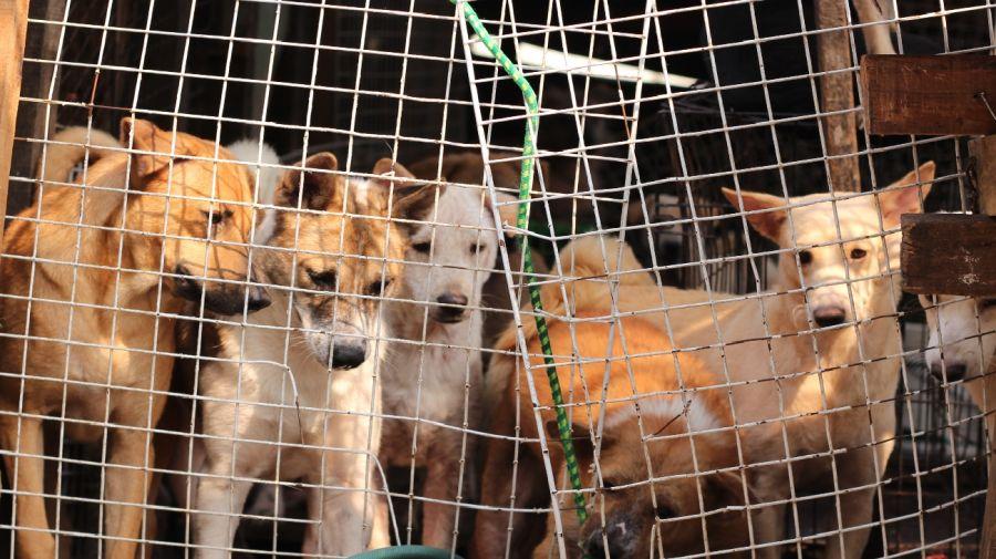 Corea del Sur Perros