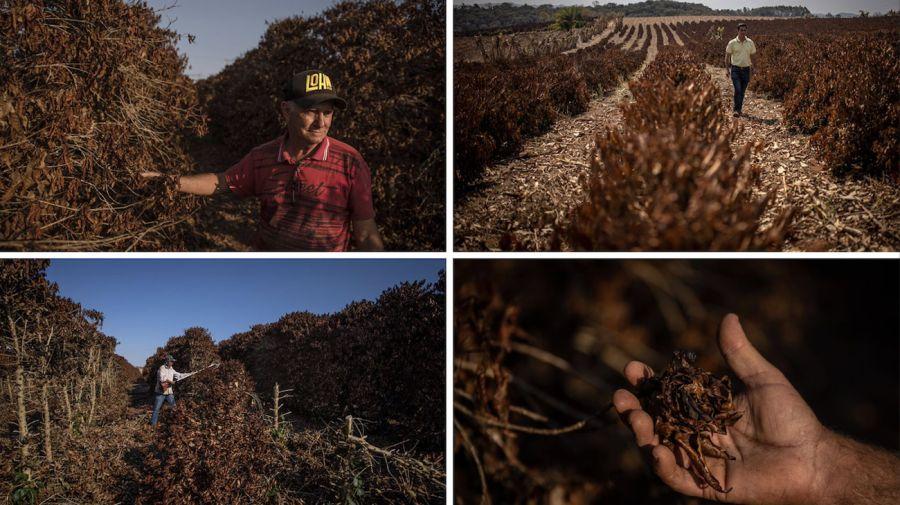 Goulart coffee plantation Brazil