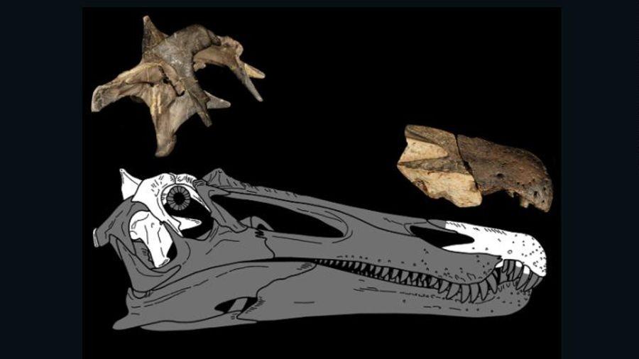 1007_dinosaurio