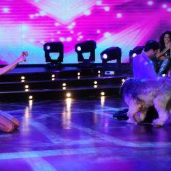 El perro de Denise en la coreografía