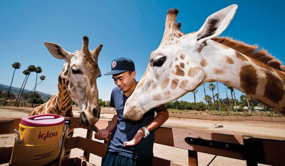 Contacto. En el Zoo de San Diego, los visitantes pueden alimentar animales en riesgo de desaparición sin rejas mediante.