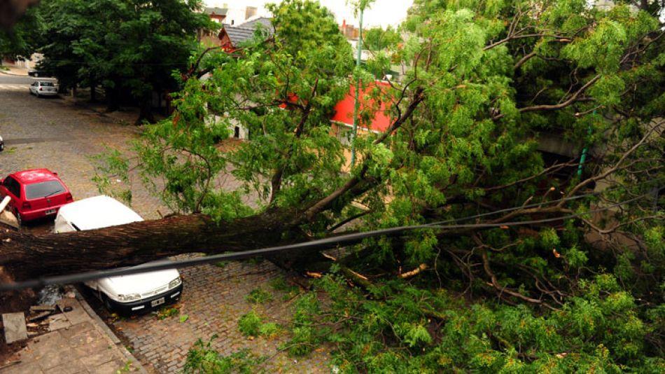 El temporal de lluvia y viento que azotó a Capital Federal y Gran Buenos Aires ayer, minutos antes de la medianoche, provocó la caída de árboles y daños en viviendas y automóviles.