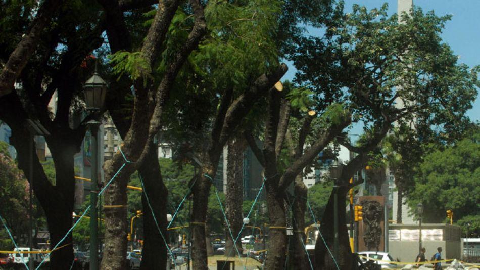 """Para el descendiente del legado familiar, los árboles son trabajados con """"responsabilidad técnica""""."""