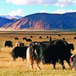 0308 Tibet