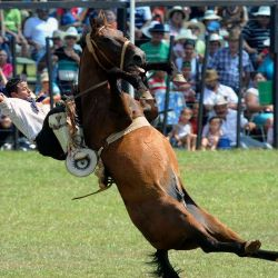1224-rodeo-afpg