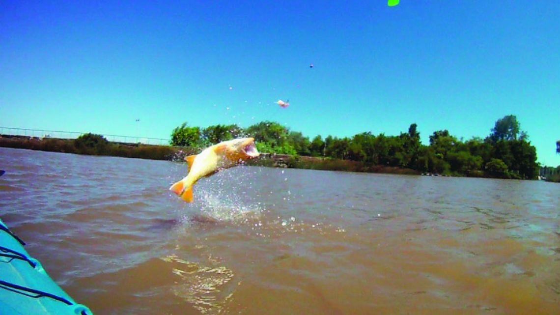 Resultado de imagen para pesca corrientes
