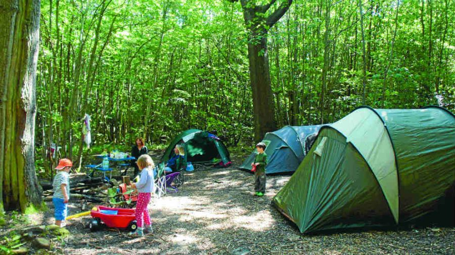Camping-under-the-oak