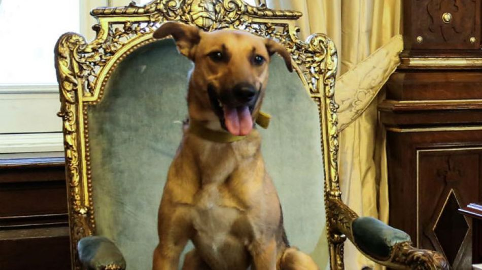 El perro del PRO se sentó en el sillón presidencial.