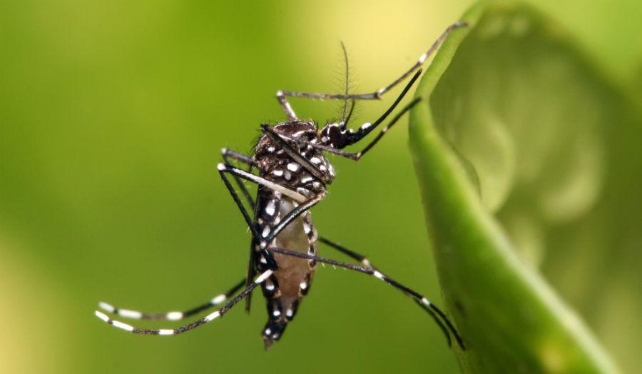 Cómo protegerse de los mosquitos