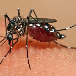 Cómo protegerse de los mosquitos2