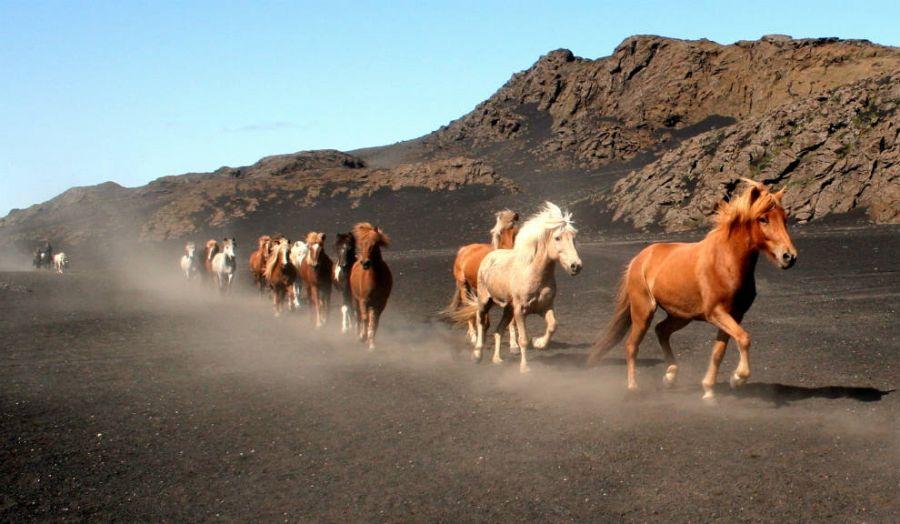 caballos2-990