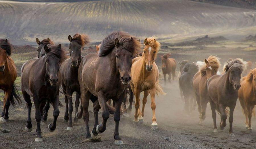 caballos3-990