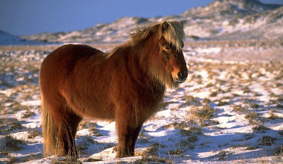 caballos5-990